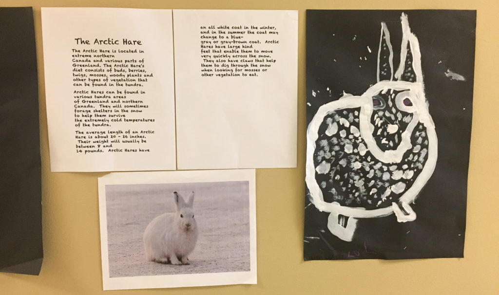The Arctic Hare